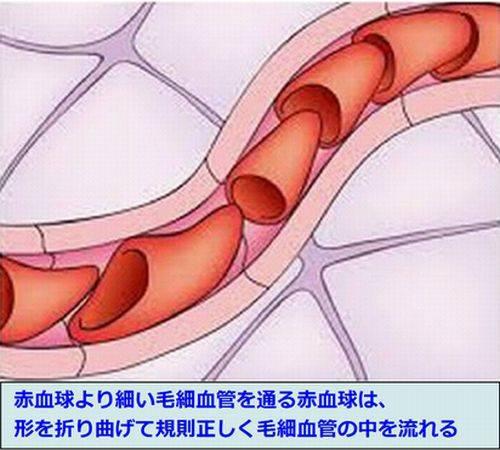 毛細血管に流れる赤血球の模式図