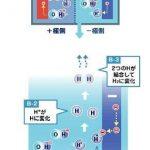 水の電気分解の模式図