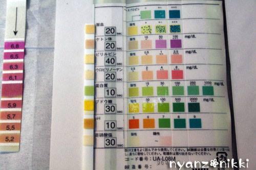 尿検査キットの検査結果の写真