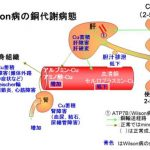Wilson病の銅代謝病態のイラスト