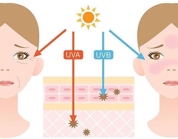 紫外線が顔の肌に当たる影響