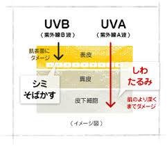 紫外線が肌に与える影響の模式図